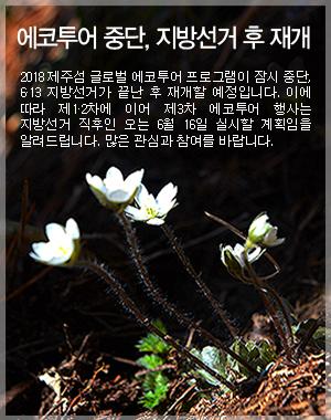 에코투어중단-팝업(2018에코투어1차새끼노루귀).jpg